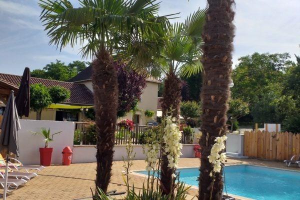 la piscine et ses palmiers